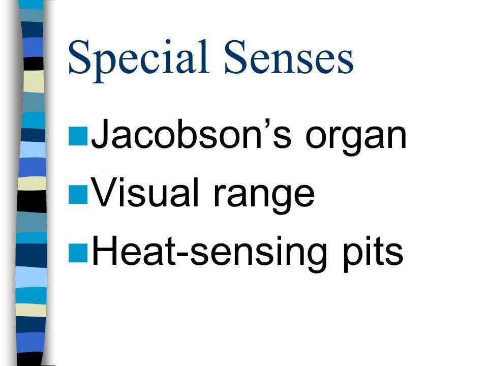 Special Senses Jacobson's organ Visual range Heat-sensing pits