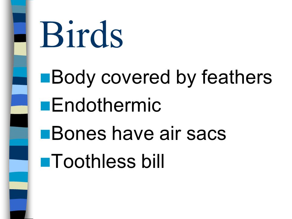 Birds Body covered by feathers Endothermic Bones have air sacs