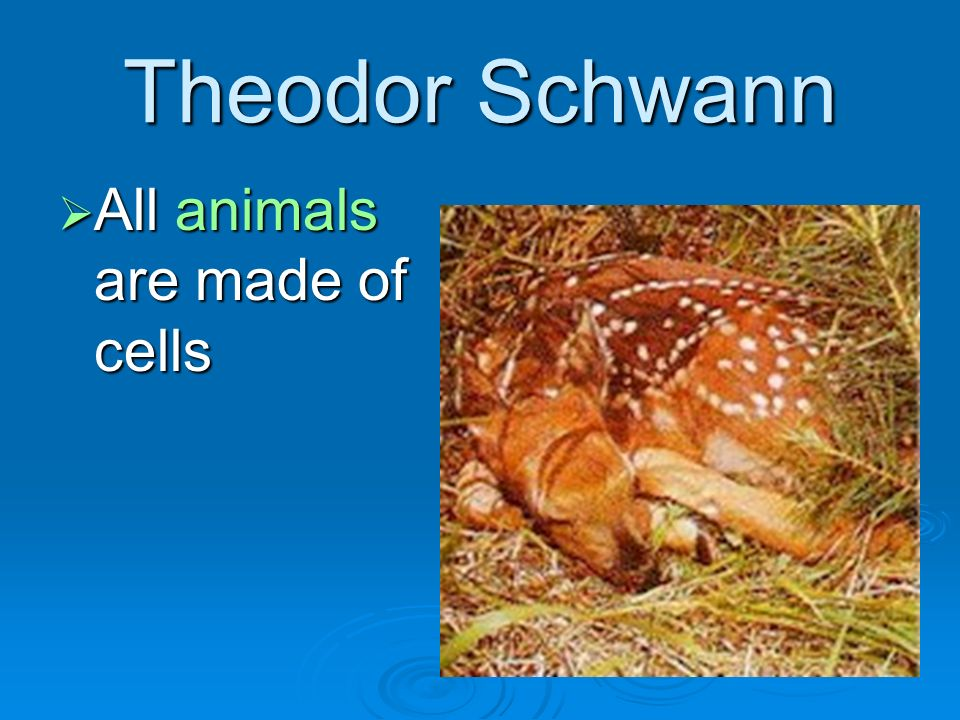 Theodor Schwann All animals are made of cells