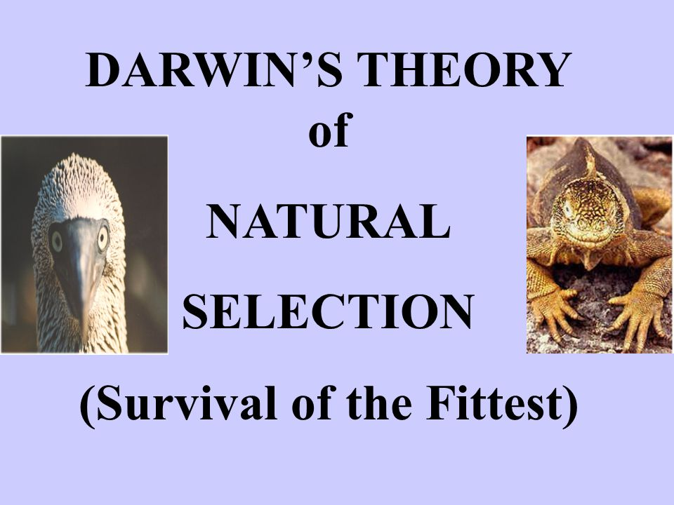 Darwin S Theory Of Natural Selection Video
