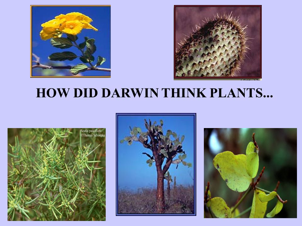 HOW DID DARWIN THINK PLANTS...
