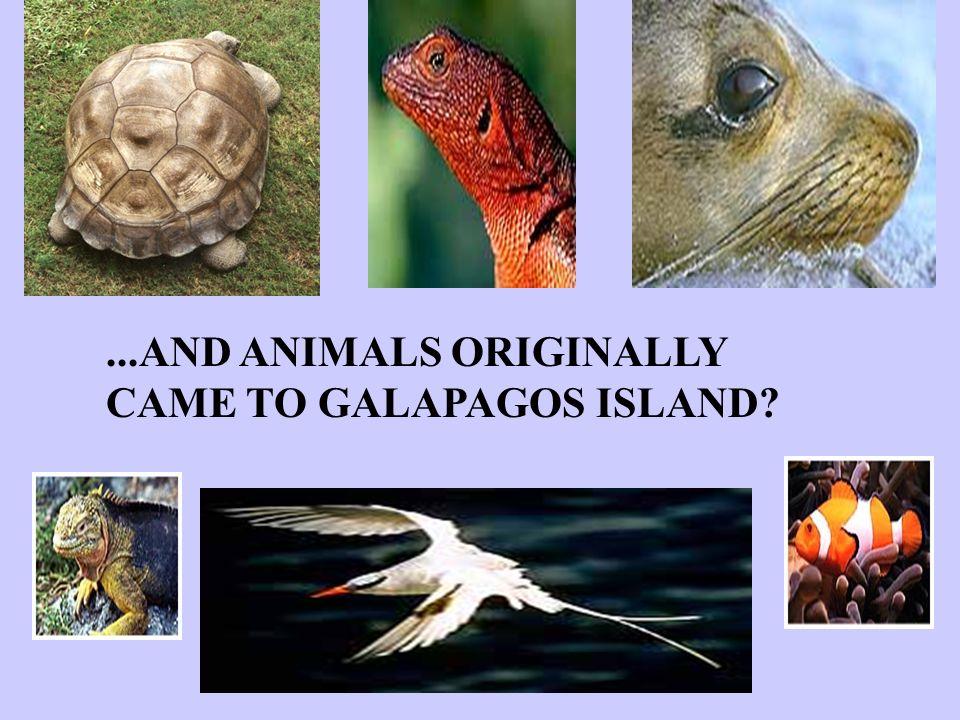 ...AND ANIMALS ORIGINALLY CAME TO GALAPAGOS ISLAND