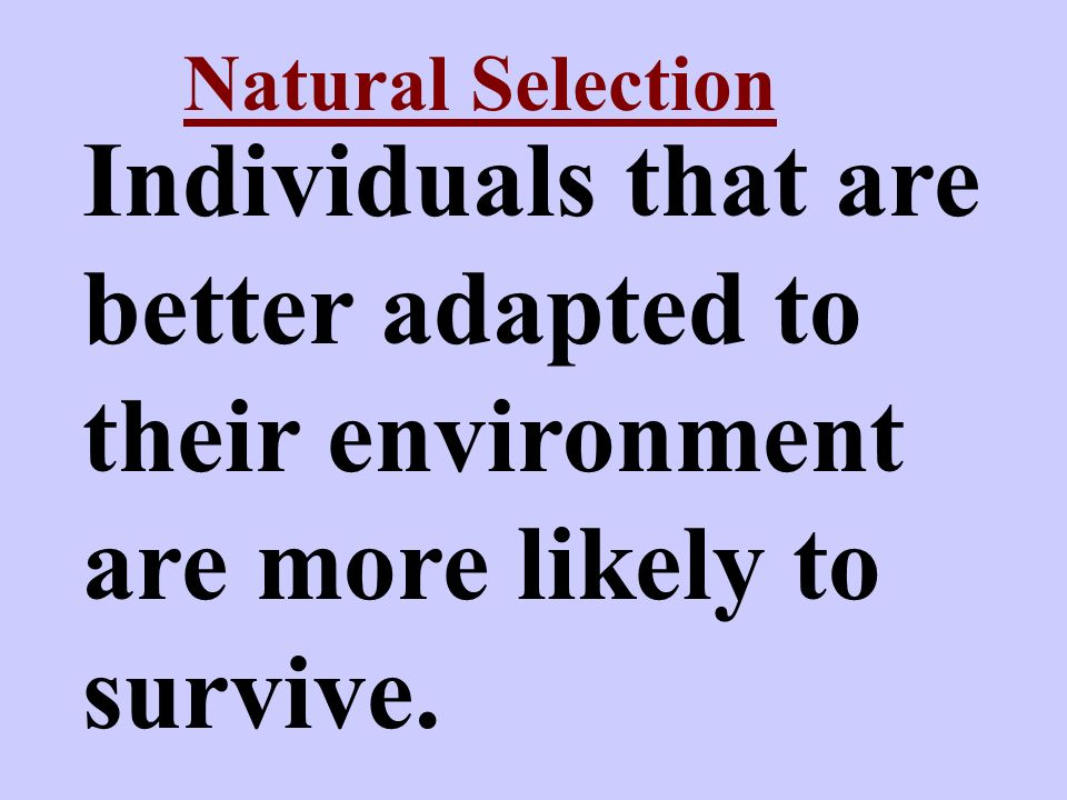 Natural Selection Individuals that are better adapted to their environment are more likely to survive.