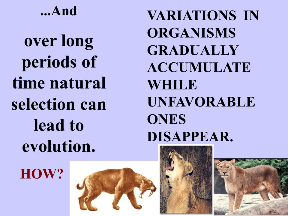 over long periods of time natural selection can lead to evolution.