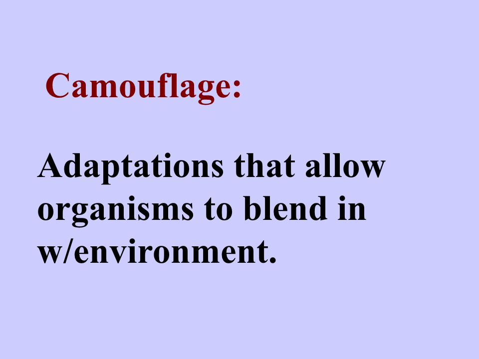 Camouflage: Adaptations that allow organisms to blend in w/environment.