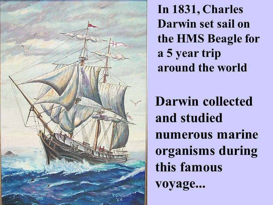 In 1831, Charles Darwin set sail on the HMS Beagle for a 5 year trip around the world