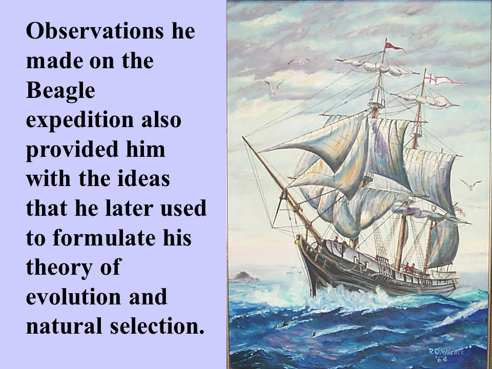 Observations he made on the Beagle expedition also provided him with the ideas that he later used to formulate his theory of evolution and natural selection.