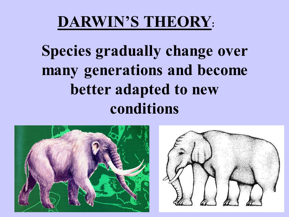 DARWIN'S THEORY: Species gradually change over many generations and become better adapted to new conditions.