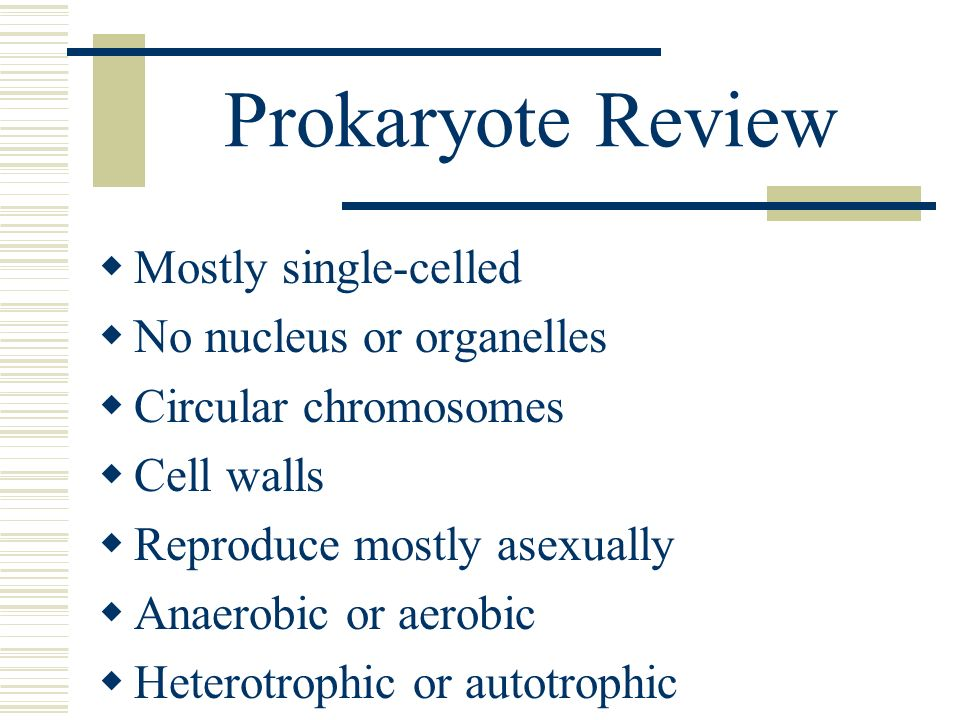 Prokaryote Review Mostly single-celled No nucleus or organelles