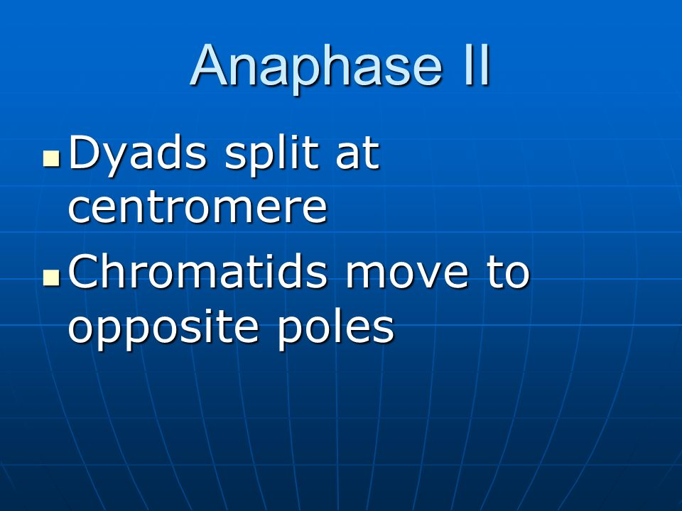 Anaphase II Dyads split at centromere