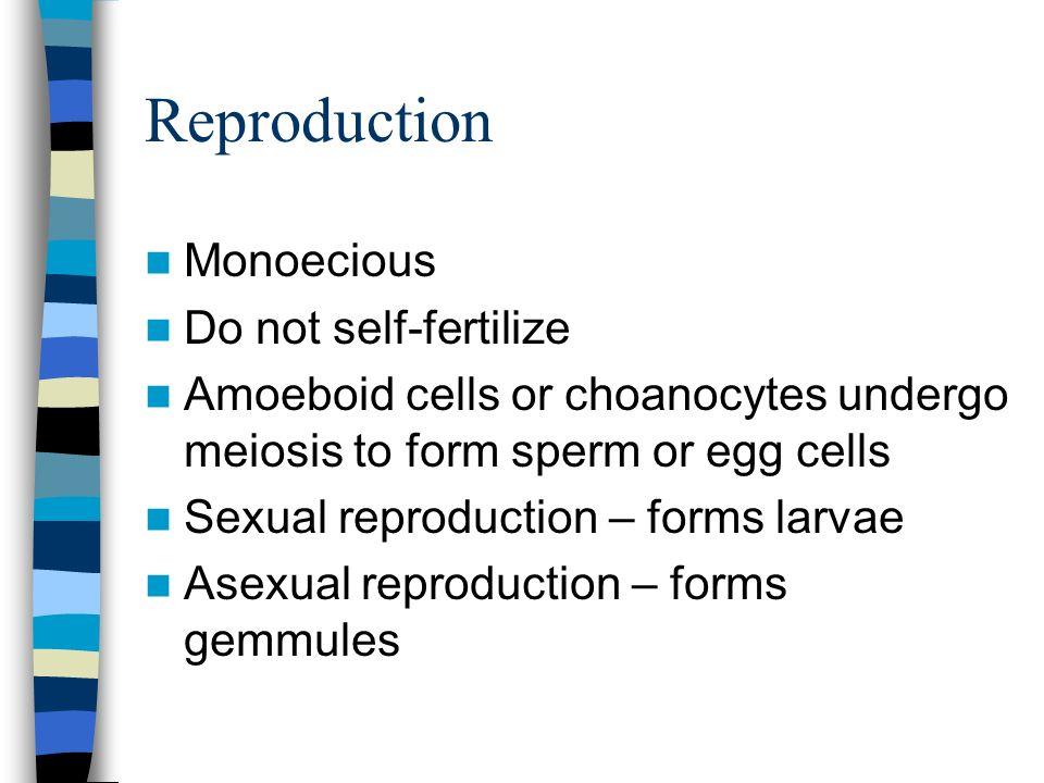 Reproduction Monoecious Do not self-fertilize