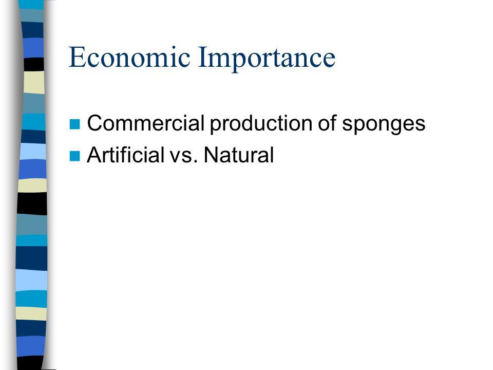 Economic Importance Commercial production of sponges