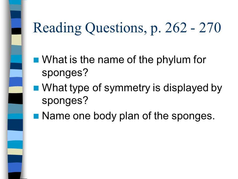 Reading Questions, p. 262 - 270 What is the name of the phylum for sponges What type of symmetry is displayed by sponges