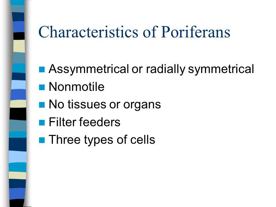 Characteristics of Poriferans