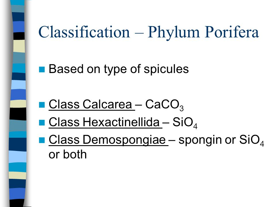 Classification – Phylum Porifera