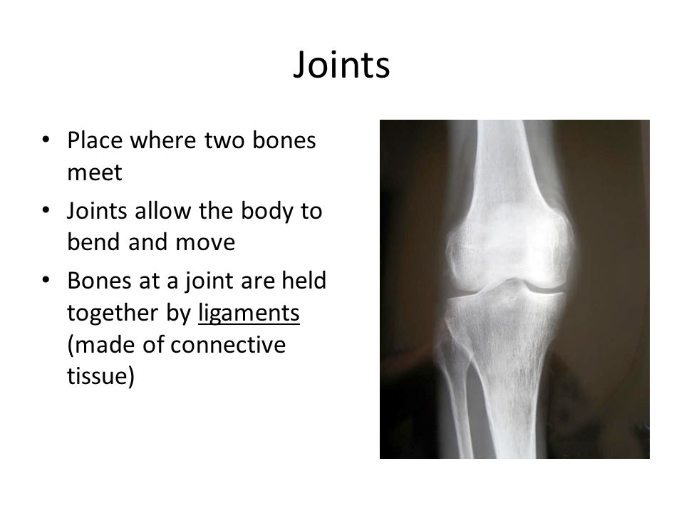 Joints Place where two bones meet