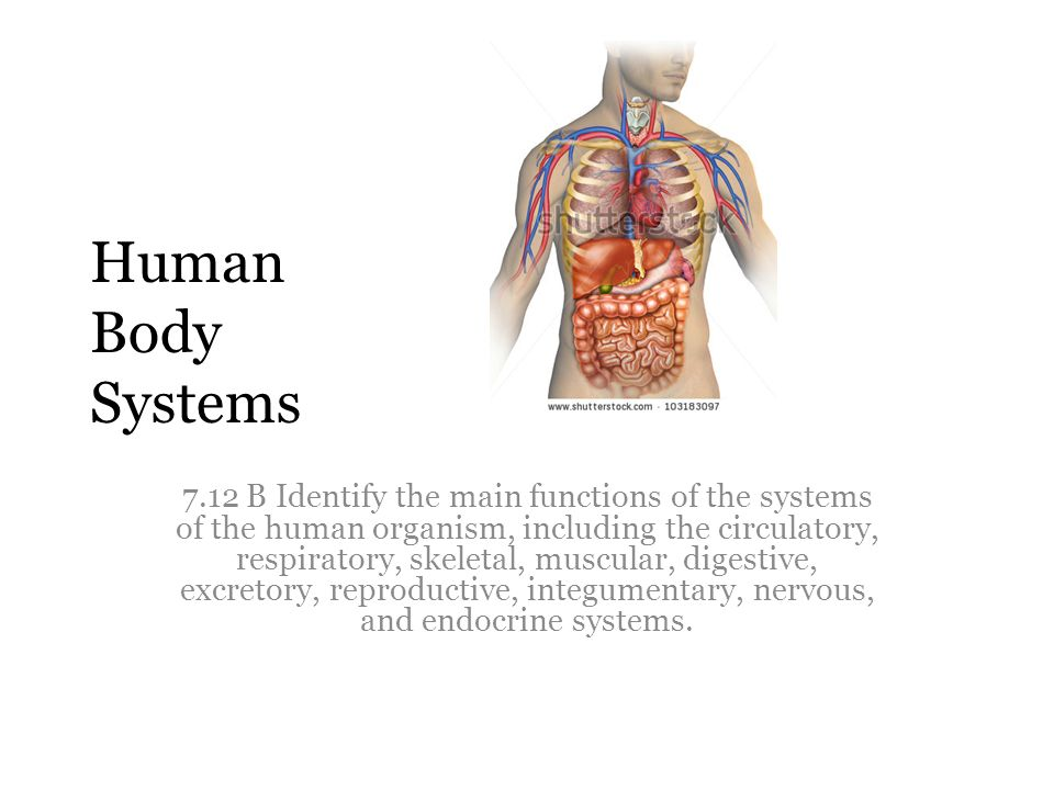 Human Body Systems 7.12 B Identify the main functions of the systems ...