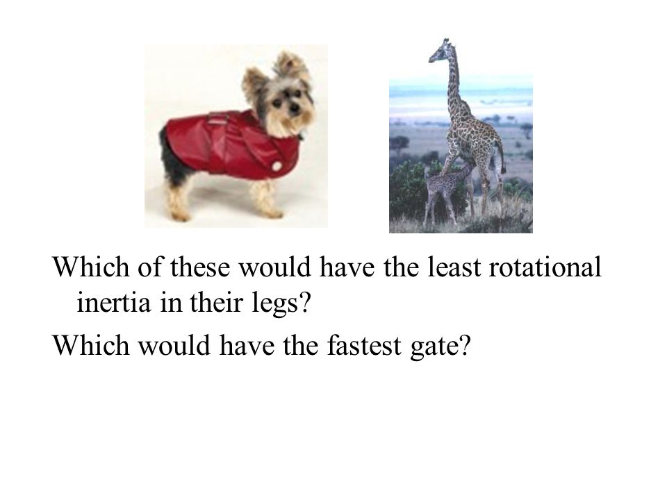 Which of these would have the least rotational inertia in their legs