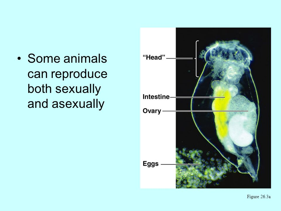 Some animals can reproduce both sexually and asexually