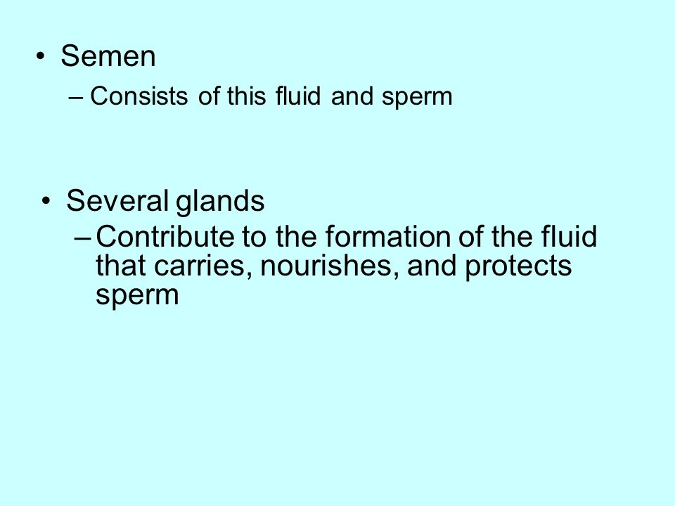 Semen Consists of this fluid and sperm. Several glands.