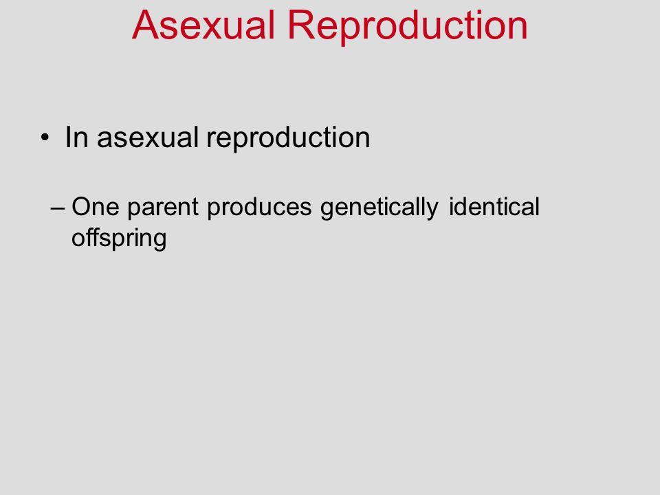 Asexual Reproduction In asexual reproduction