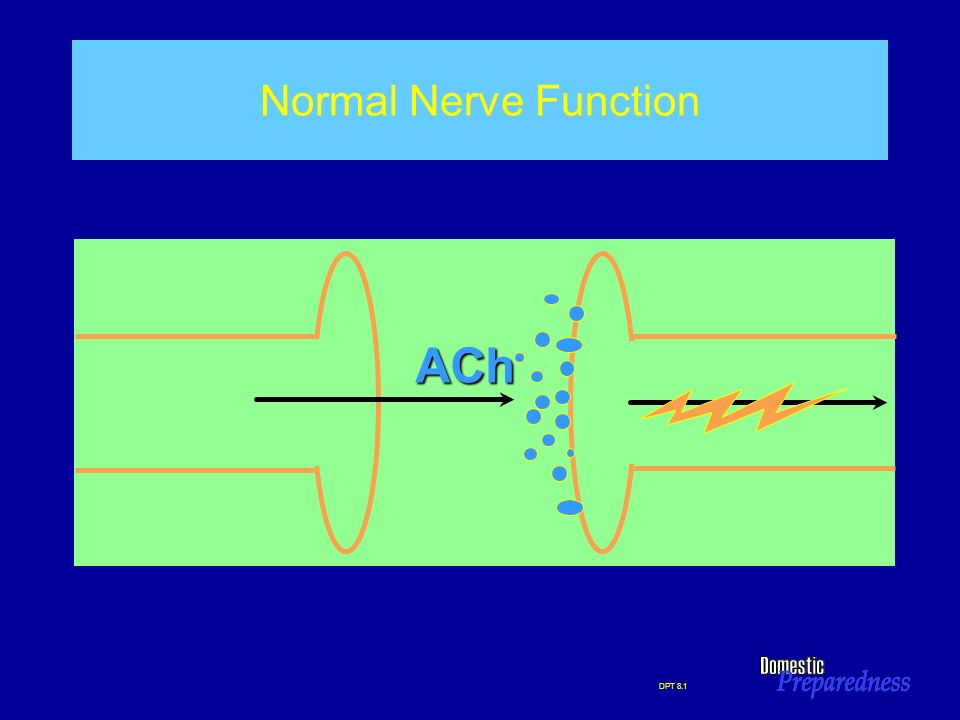 ACh Normal Nerve Function