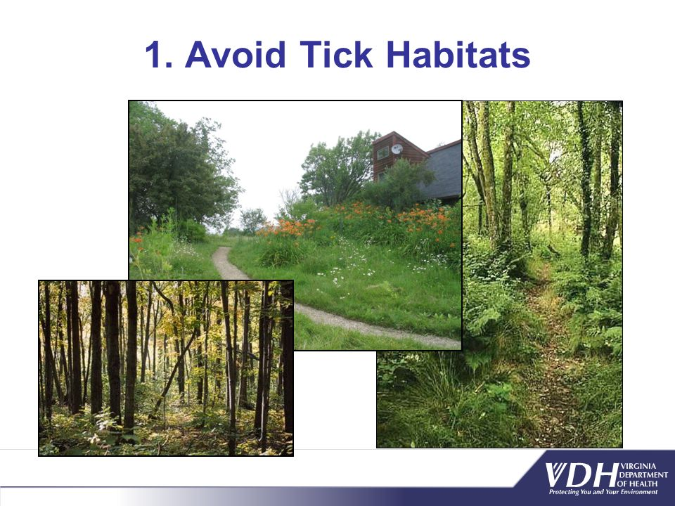 1. Avoid Tick Habitats Blacklegged ticks are forest creatures - not normally found in open fields. To avoid blacklegged ticks, you should: