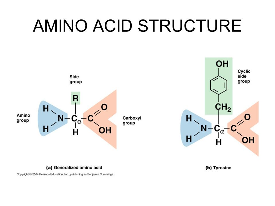 amino acids structure to full name Dna is a long polymer made from repeating units called nucleotides the structure of dna is dynamic along its length, being capable of coiling into tight loops, and other shapes.