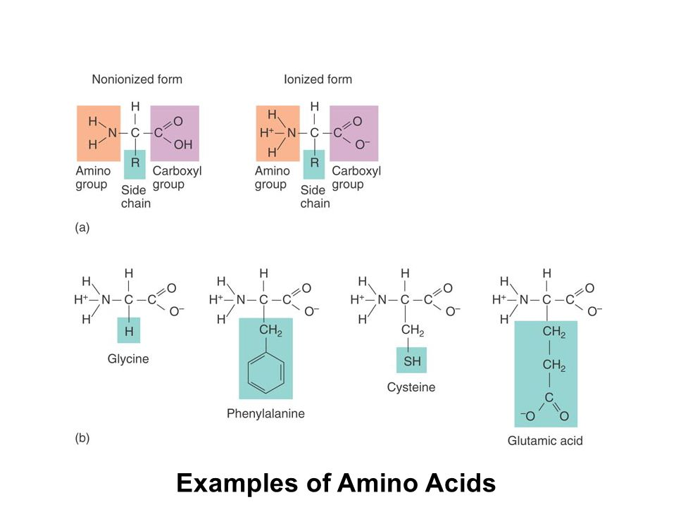 chapter 2 basic chemistry ppt video online download