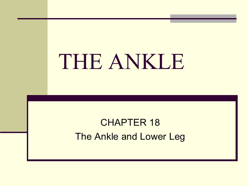 CHAPTER 18 The Ankle and Lower Leg