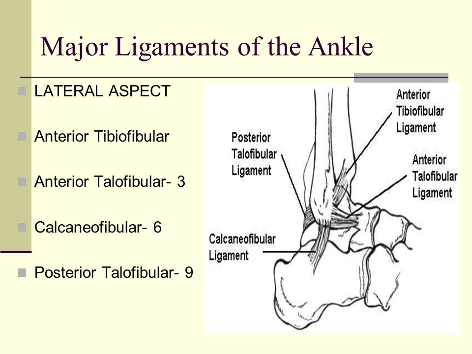 Major Ligaments of the Ankle