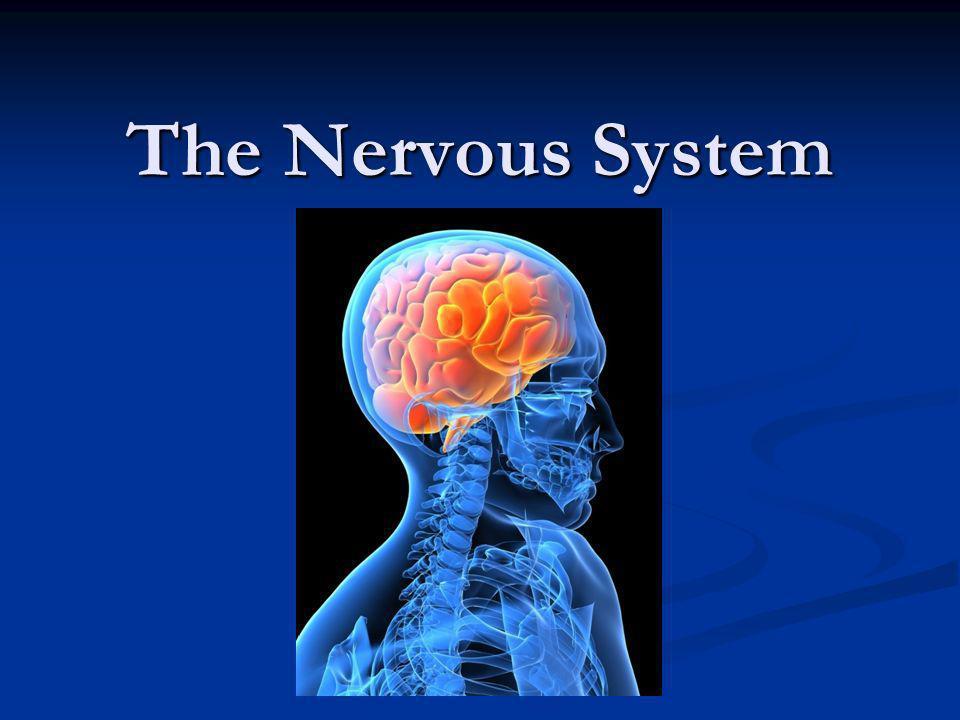 The Nervous System Ppt Video Online Download