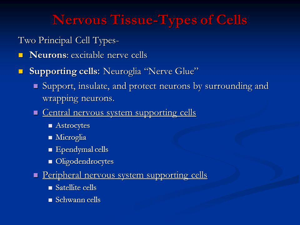 Nervous Tissue-Types of Cells