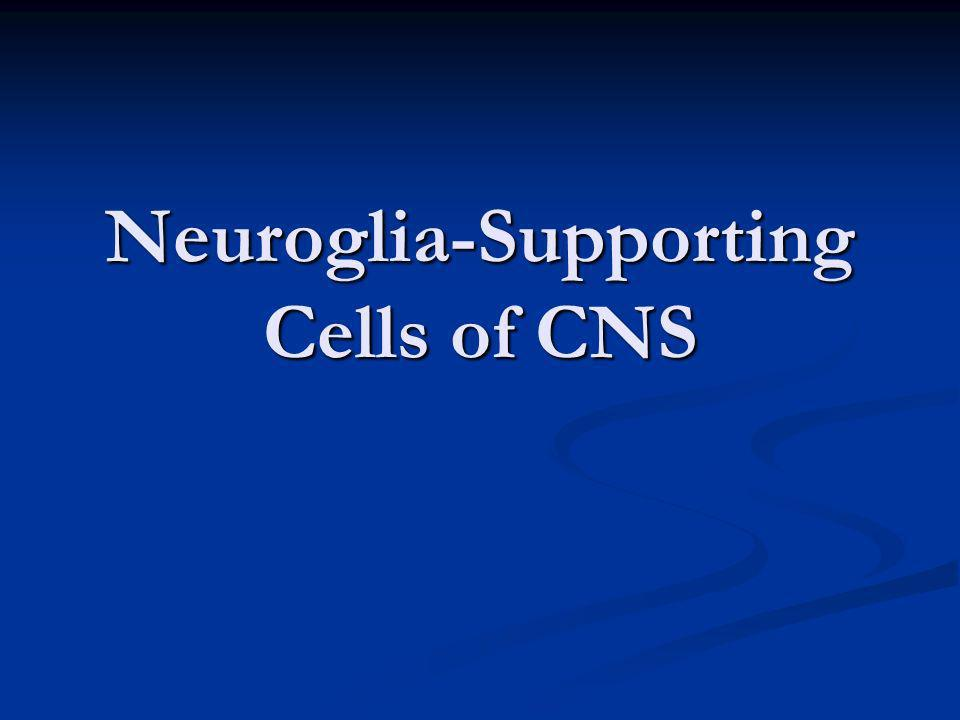 Neuroglia-Supporting Cells of CNS