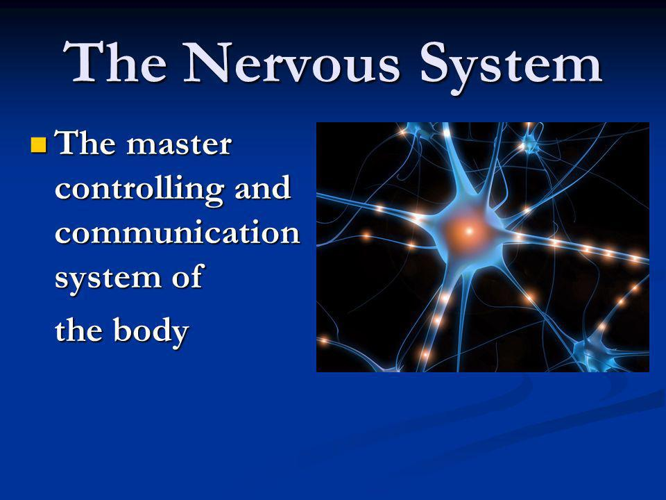 The Nervous System The master controlling and communication system of