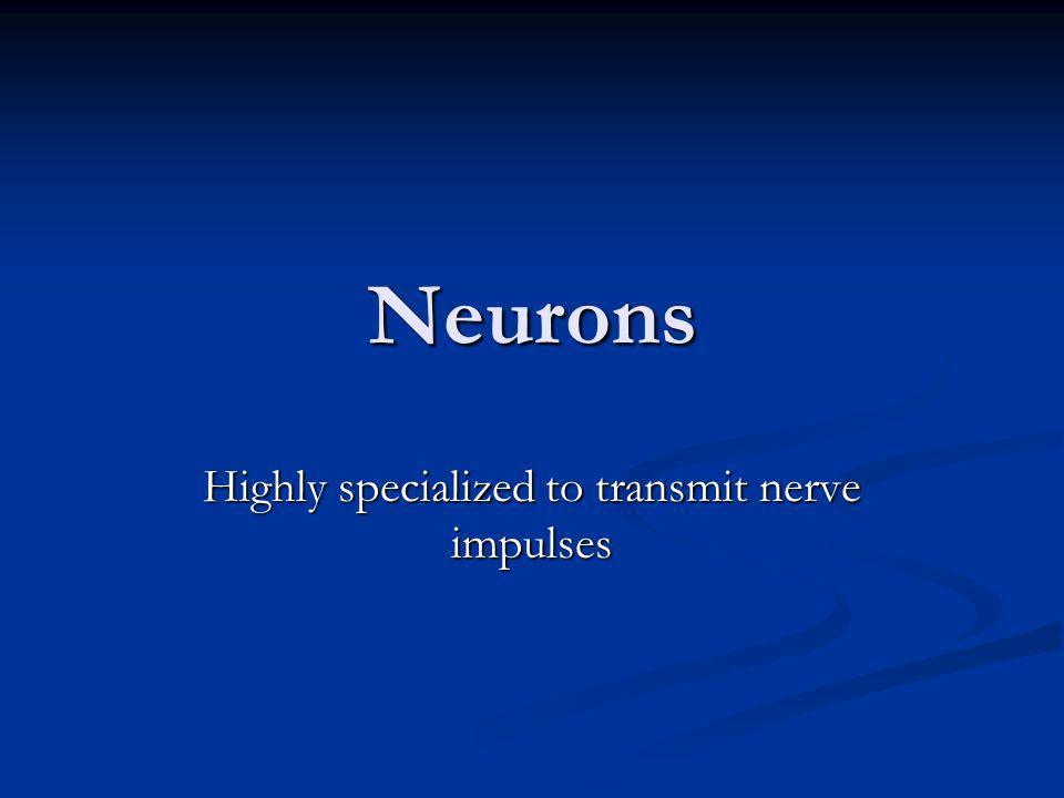 Highly specialized to transmit nerve impulses