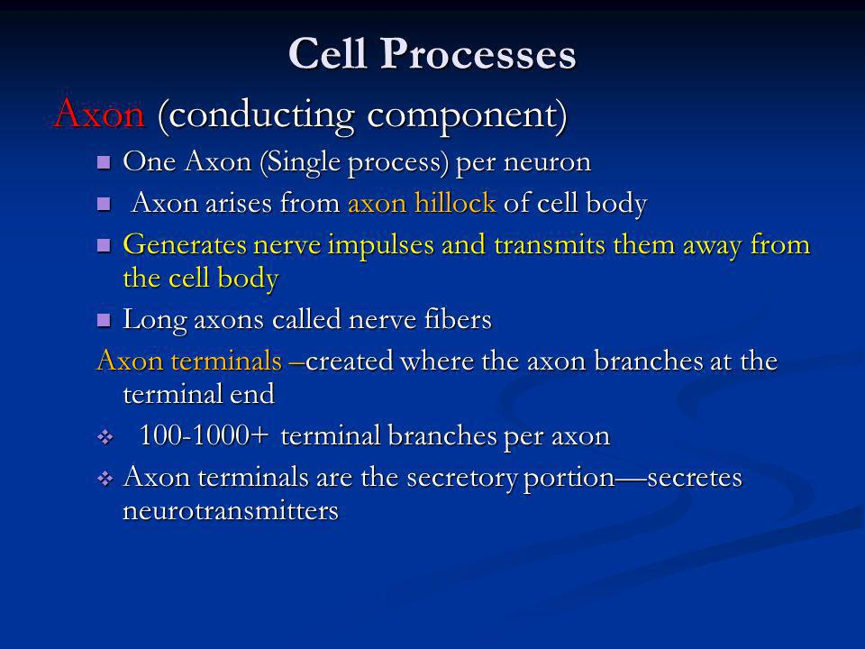 Cell Processes Axon (conducting component)