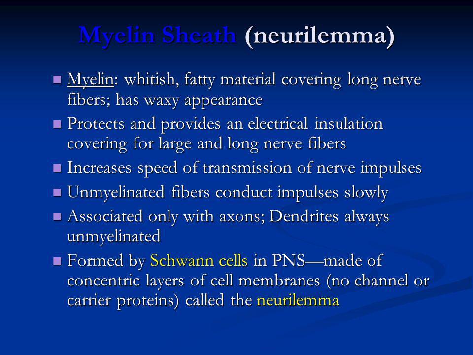 Myelin Sheath (neurilemma)