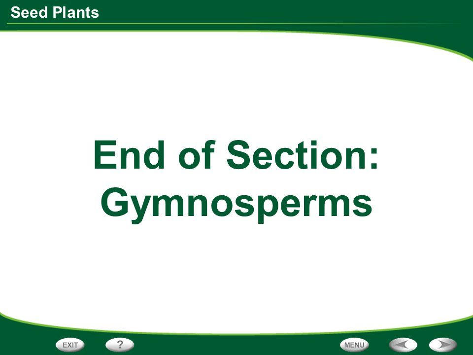 End of Section: Gymnosperms