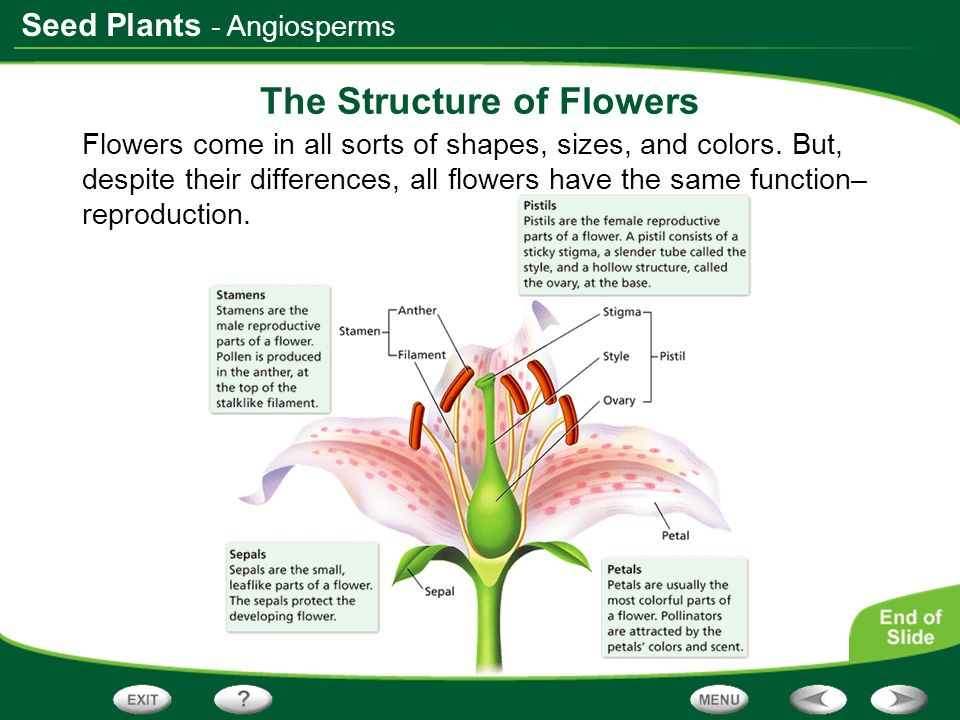 The Structure of Flowers