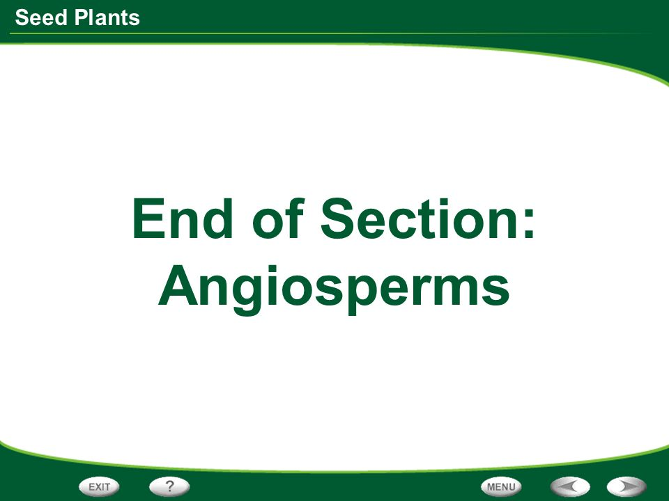 End of Section: Angiosperms