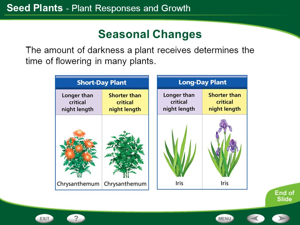 Seasonal Changes - Plant Responses and Growth