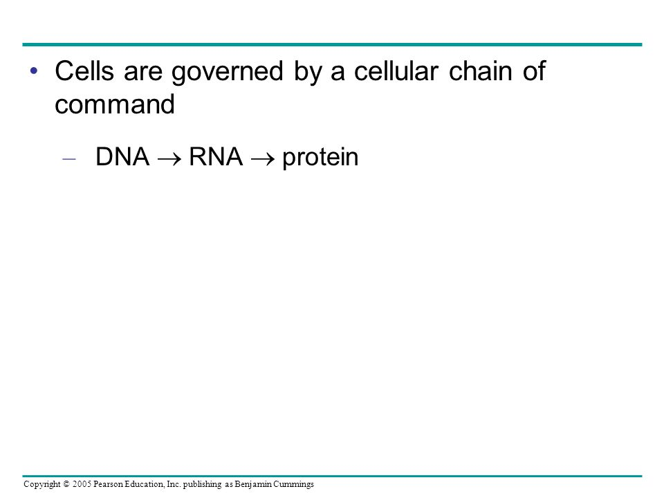 Cells are governed by a cellular chain of command