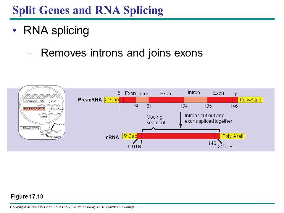 Split Genes and RNA Splicing