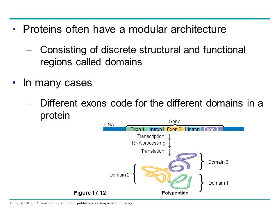 Proteins often have a modular architecture