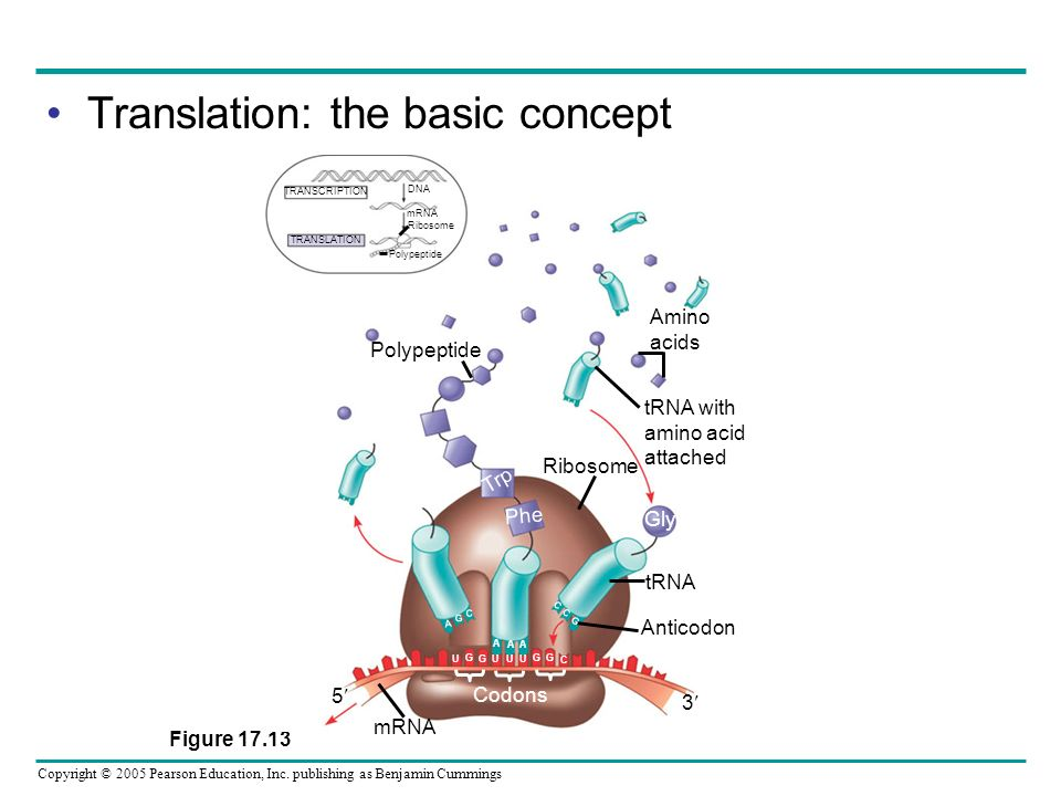 Translation: the basic concept