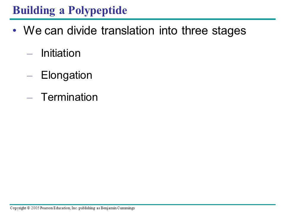 Building a Polypeptide
