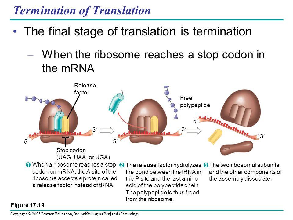 Termination of Translation