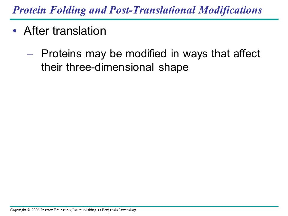 Protein Folding and Post-Translational Modifications