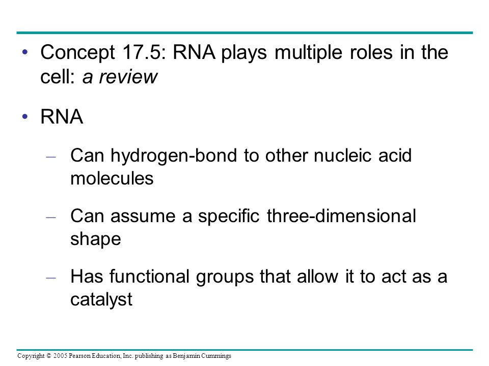 Concept 17.5: RNA plays multiple roles in the cell: a review RNA